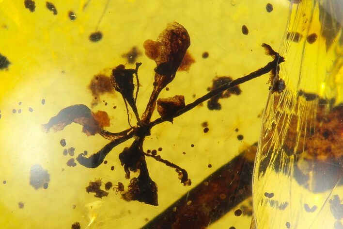 5.3mm Fossil Flower In Amber - Myanmar